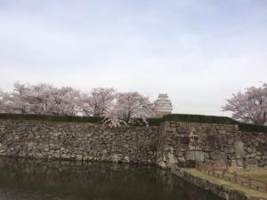 姫路城と桜11