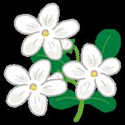 lavender_jasmine