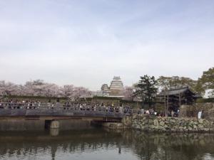 姫路城と桜10