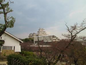 姫路城と桜005