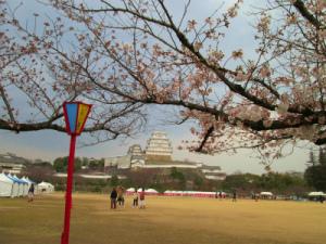 姫路城と桜002